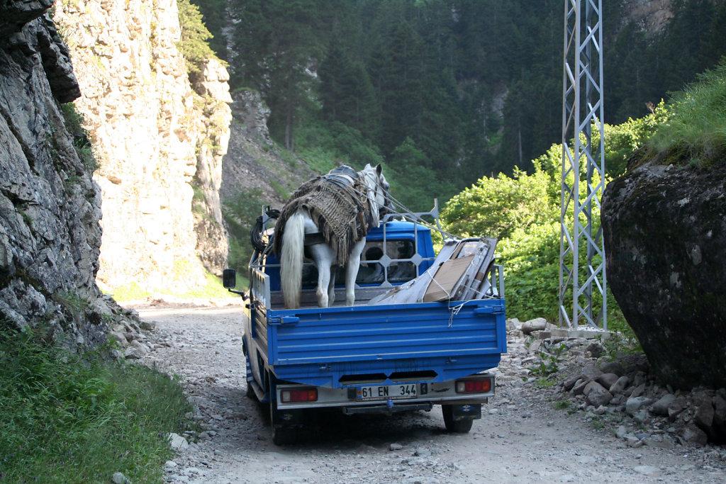 Pferdetransfer